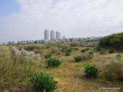 Near Netanya. Iris reserve (36)