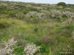 Near Netanya. Iris reserve (39)