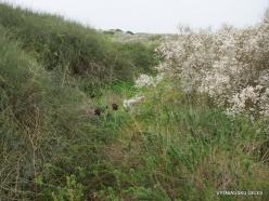 Near Netanya. Iris reserve (9)
