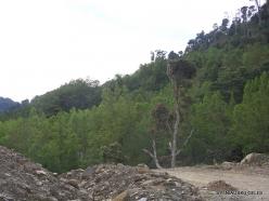 West Papua. Arfak Mountains. Hingk (2)