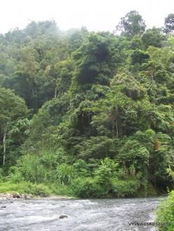West Papua. Arfak Mountains. Kali Utai