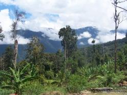 West Papua. Arfak Mountains. Meni (10)