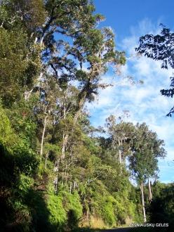 West Papua. Arfak Mountains. Meni (15)