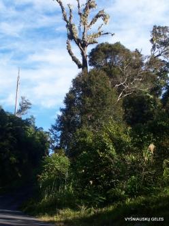 West Papua. Arfak Mountains. Meni (16)