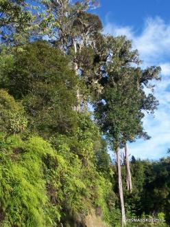 West Papua. Arfak Mountains. Meni (17)