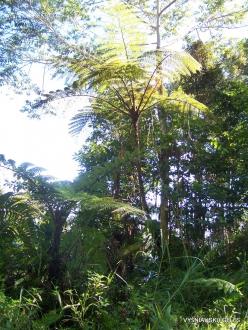 West Papua. Arfak Mountains. Meni (19)