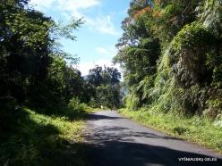 West Papua. Arfak Mountains. Meni (20)
