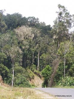 West Papua. Arfak Mountains. Meni (7)