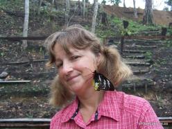 West Papua. Arfak Mountains. Meni. Butterly farm. Birdwing (Ornithoptera sp.) (2)