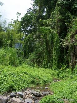 West Papua. Warkapi. Lowland rainforest (1)