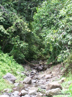West Papua. Warkapi. Lowland rainforest (2)