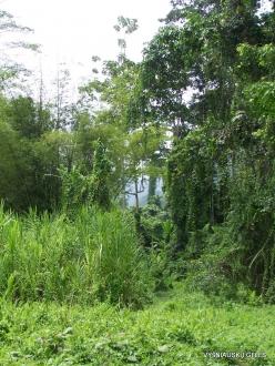 West Papua. Warkapi. Lowland rainforest (3)
