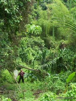 West Papua. Warkapi. Lowland rainforest (4)