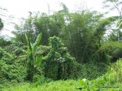 West Papua. Warkapi. Lowland rainforest (5)