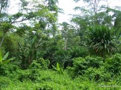 West Papua. Warkapi. Lowland rainforest (6)