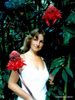 Near Bejuma. Casa Maria. Red ginger lily (Etlingera elatior)