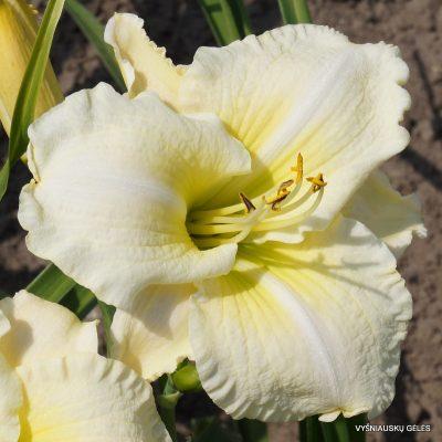 viendienes-flutter-of-angels
