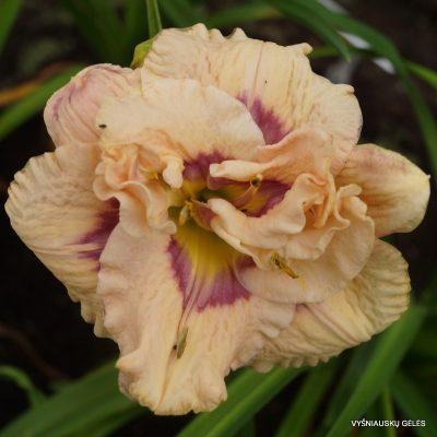 viendienes-lavender-moonbeam-2