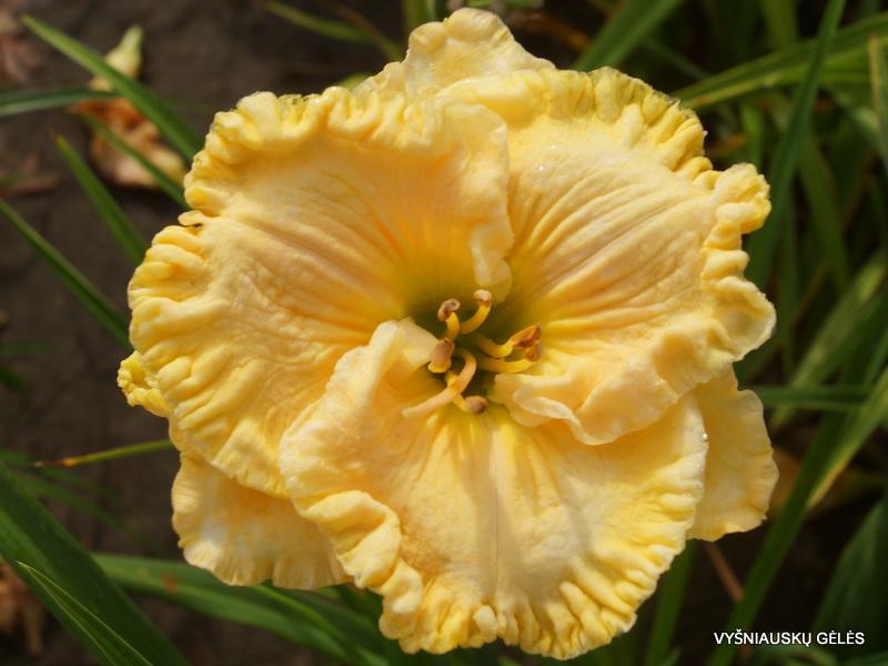 viendienes-pleated-petticoats-2