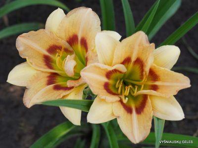 viendienes-too-many-petals-3
