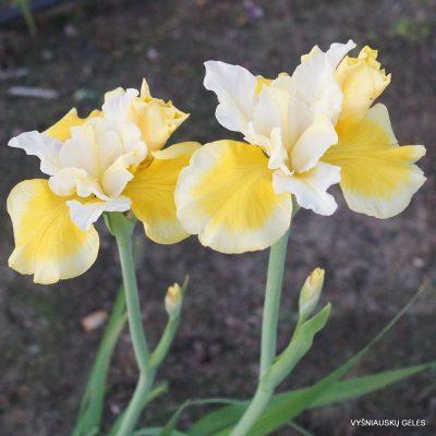 Iris-Solar-Energy-2-1