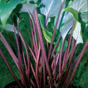 melsves-red-october