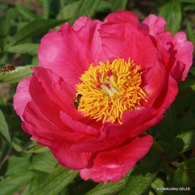 bijunai-rose-garland
