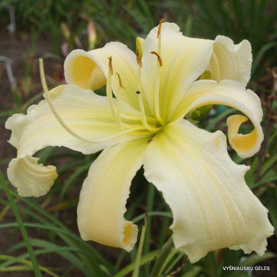viendienes-heavenly-white-lightening