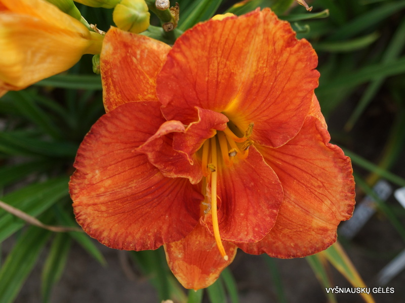 viendienes-pumpkin-and-spice-3