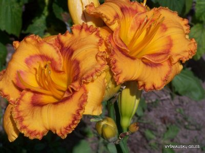 viendienes-pumpkins-gone-wild-2