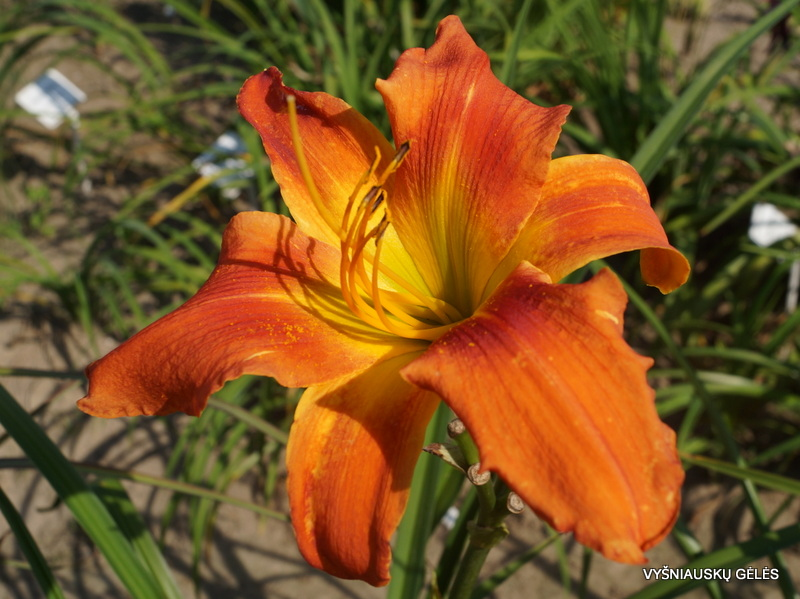 viendienes-seedling-0745-3