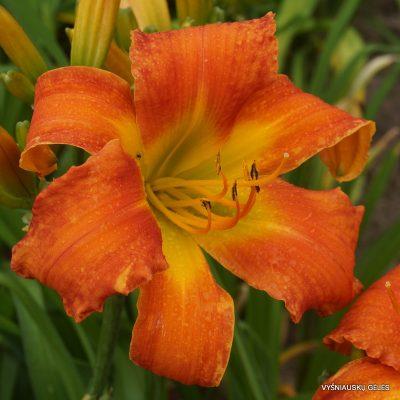 viendienes-seedling-0745