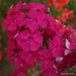 flioksai-'Gartendirector-Brodersen'